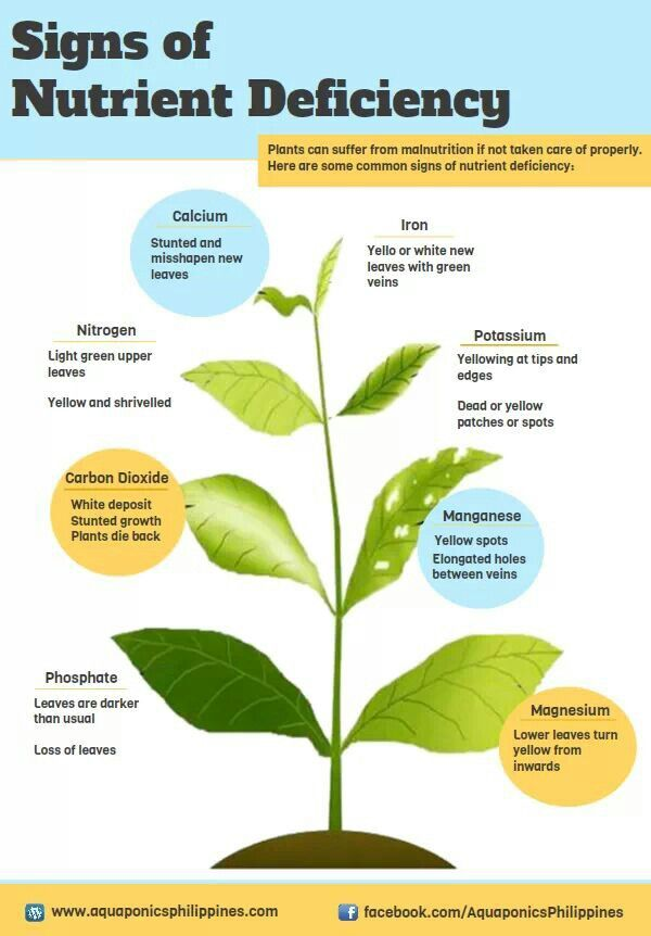 Signs of plant nutrient deficiencies.