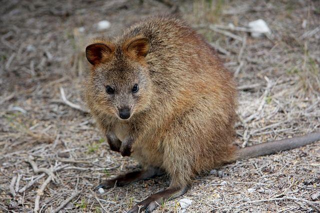 animal kingdom at Western Australia