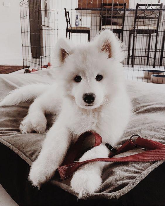 (notitle) – süße Tiere – #notitle # sweet #beasts   – Cute Dogs
