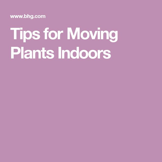 Tips for Moving Plants Indoors