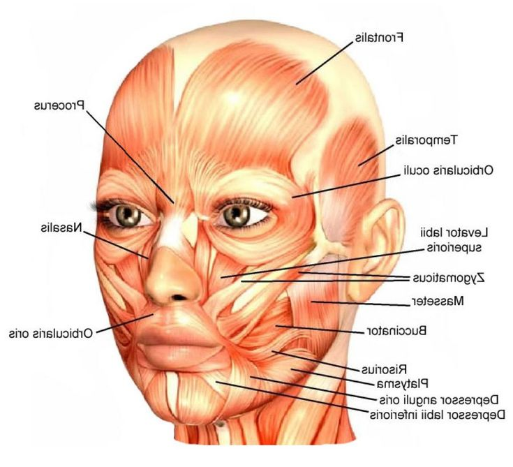 Facial Diagnosis - Alchemycal Pages