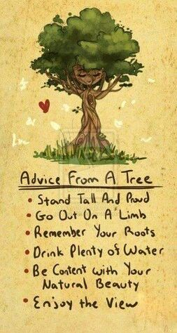 Trees sayings life inspiration quotes wisdom thought trees