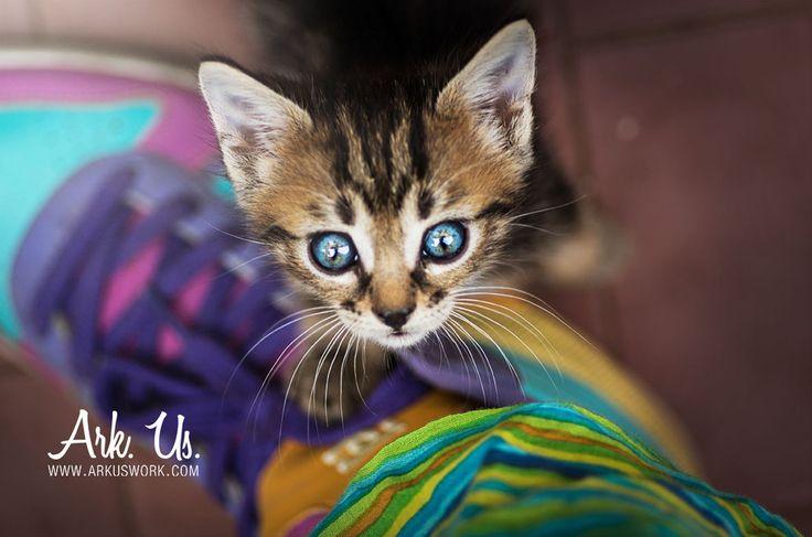 Animal Photography favourites by Edris-Kingfisher on DeviantArt