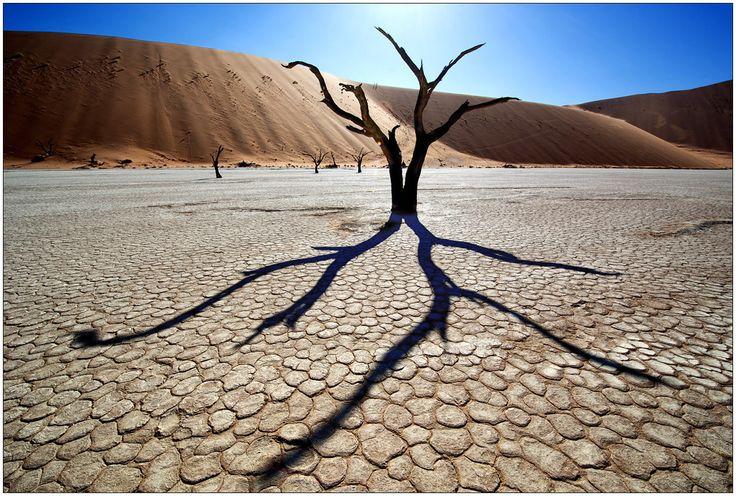 #Photograph Desert Octopus by  trolljenta on #500px