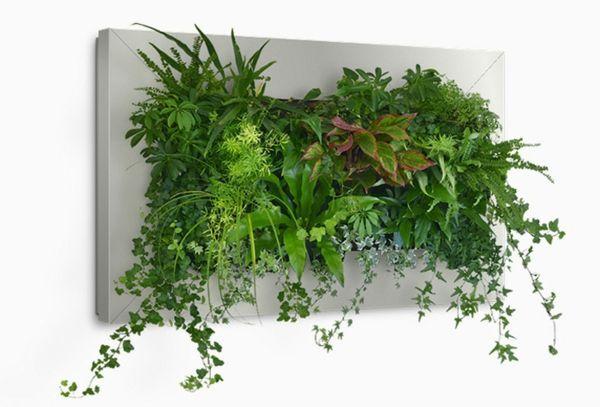 Ber ideen zu luftpflanzen auf pinterest for Wanddeko pflanzen