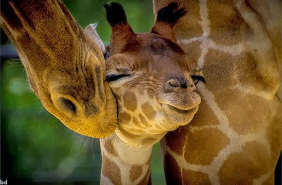 Sweet kisses from momma!