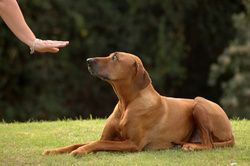 Les gestes pour éduquer son chienne doivent pas être trop brusques, pour ne pas prêter à confusion et ne pas faire peur au chiot. Le contact avec l'animal obéit à certaines règles. Des gestes de félicitations trop amples accompagnés de ...