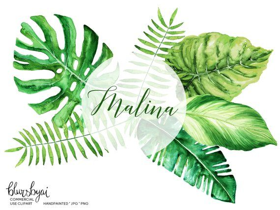 17++ Palm leaf clipart watercolor ideas in 2021