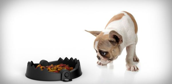Ensnaring Dog Dishes - The Trap Bowl Takes a Comically Torturous Look for Your Furry Friend (GALLERY) hahaha