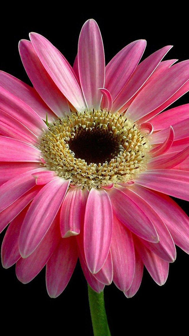 The 25 Best Flores Hd Ideas On Pinterest Flores Vector Flores