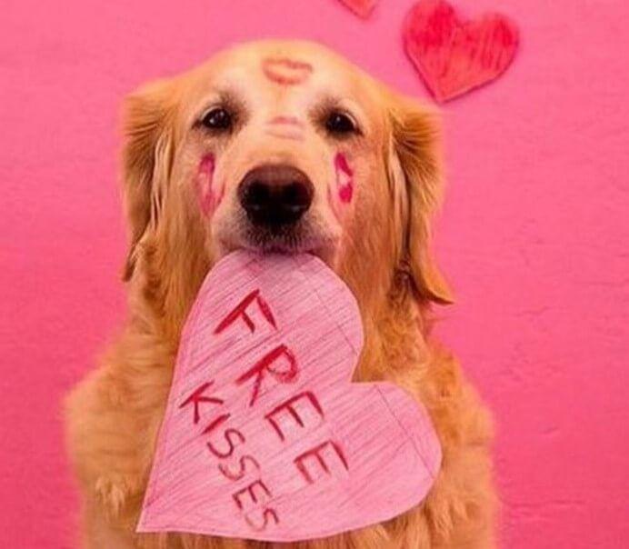 Mein Hund, mein Valentin ♥ 8 Gründe, warum der Hund ein so toller Valentin ist! Wir wünschen einen tierischen Valentinstag!  #urlaubmithund #valentinstag #lovedogs #doglovers #kisses #valentine #love #withlove #dogs #dogsofpinterest #travelblog #traveltops #kisses #pink #herz #heart #iloveyou