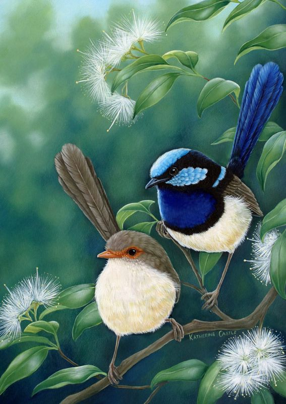 185 Best Blue Wren Inspired Arts And Crafts Images On