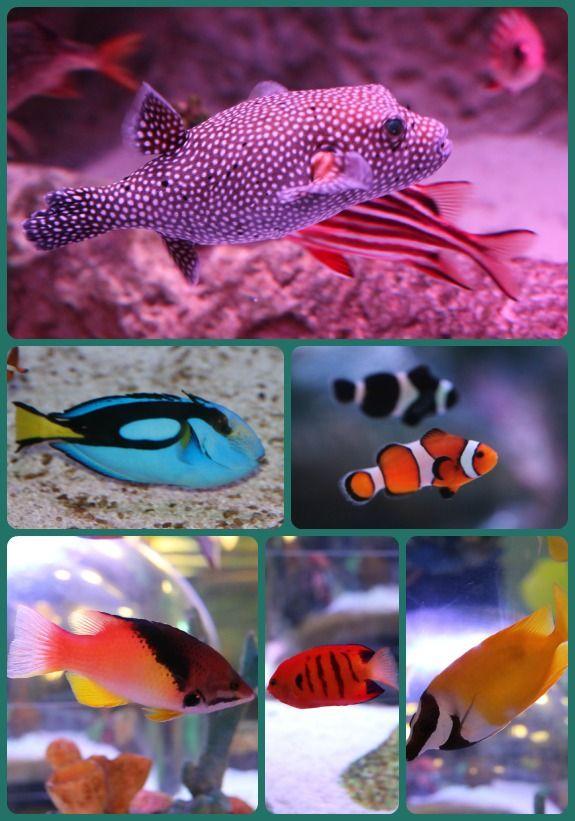 Sea Life Aquarium In Grapevine Texas Travel Pinterest