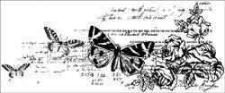 CS795 Kaisercraft Timeless Clear Stamp - Botanical
