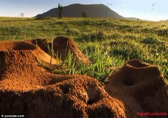 http://www.vyperlook.com/wp-content/uploads/2012/02/Giant-Ant-Hill-Megalopolis-Discovered-In-Brazil-2.jpg