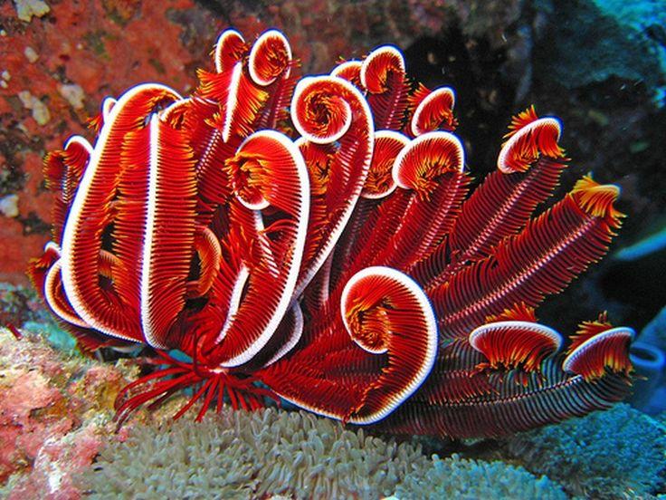 marine biology - Google keresés