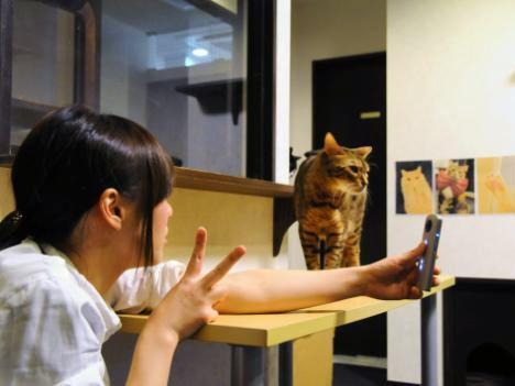株式会社きゃりこは、同社が運営する猫カフェ「きゃりこ」新宿店において「RICOH THETA SC」の無料貸出を2017年1月からスタートした。リコーが機材協力している。
