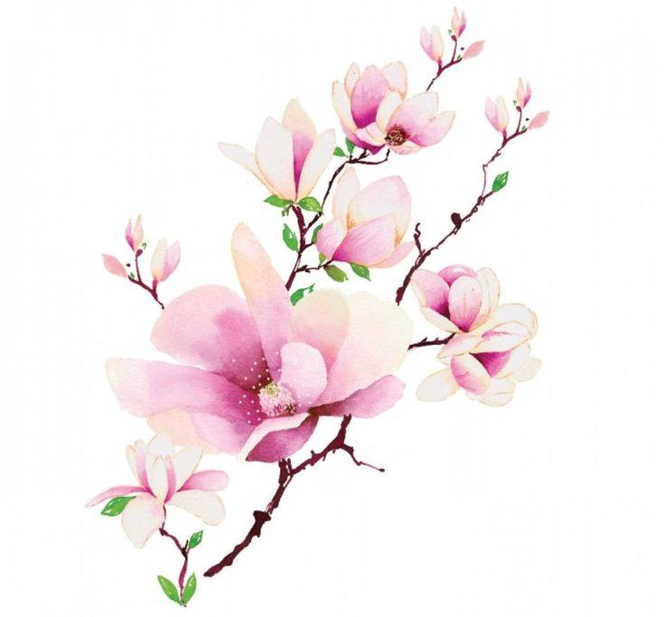 magnolia - Sök på Google