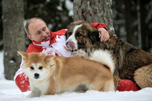 Putin and Akitadog Yume 秋田犬「ゆめ」と戯れるプーチン大統領、ロシア