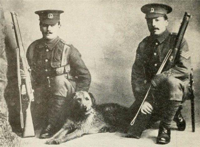 Сторожевая собака. Британские экспедиционные силы.