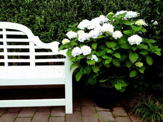 Bungalow Blue Interiors - Home - obsessed: lutyens bench, take2
