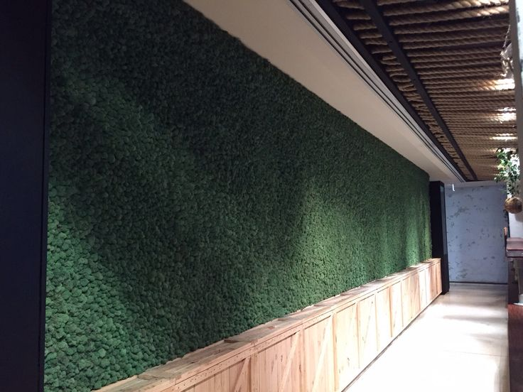 The amazing living moss wall at the Cruise Bar Sydney. Designed by Design Native