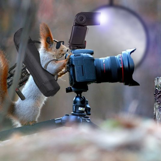 The 11 Best Photoshops Reddit Made Of This Incredible Squirrel Photographer
