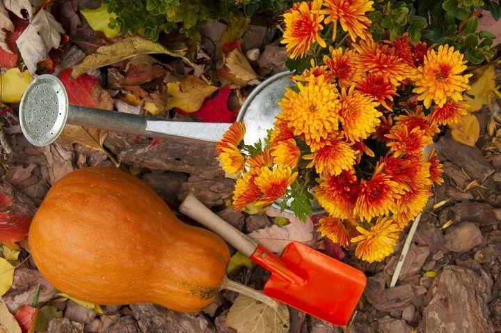 Que planter en octobre au potager et dans le jardin en ...