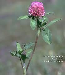 Flowers: Wild Medicine