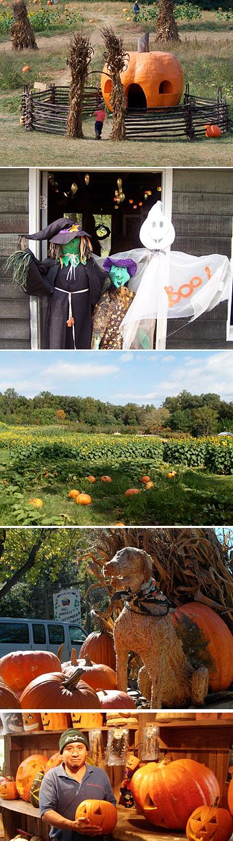 Kids and families have a great fun time at Queen Anne Farm in Mitchellville, Maryland.  We offer a traditional pumpkin patch, hayride, and lots of halloween and fall fun for the whole family.