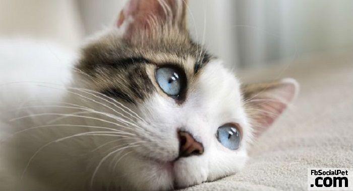 Perché il mio gatto urina in giro per casa? | FbSocialPet.com Molte possono essere le cause all'origine di tale comportamento... #Iloveanimals #Ilovepets #gatti #iostoconFbSocialPet #FbSocialPet Rimani aggiornato su FbSocialPet.com