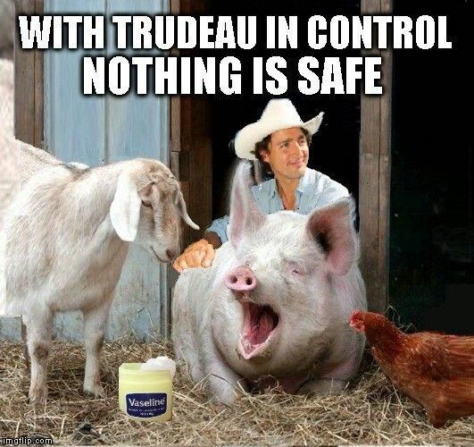 Image result for stupid pics of Trudeau