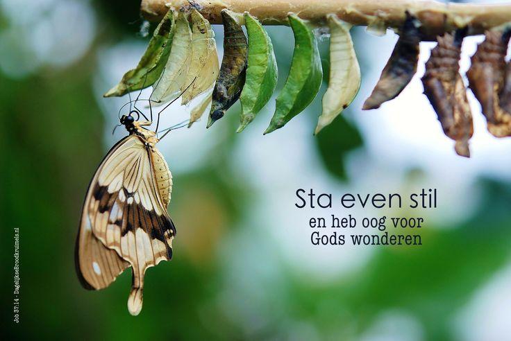Sta even stil en heb oog voor Gods wonderen. Job 37:14  #Stil, #Wonderen  https://www.dagelijksebroodkruimels.nl/job-37-14/