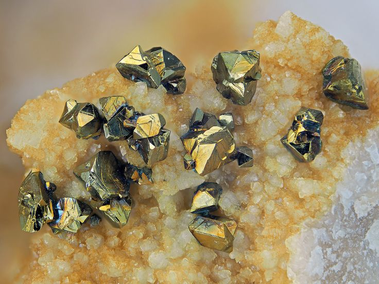 Chalcopyrite xx on Dolomite, Korb Mine, Nohfelden, St. Wendel district, Saarland, Germany. Fov 8.6 mm.  Collection: loparit.  Copyright: Edgar Mueller