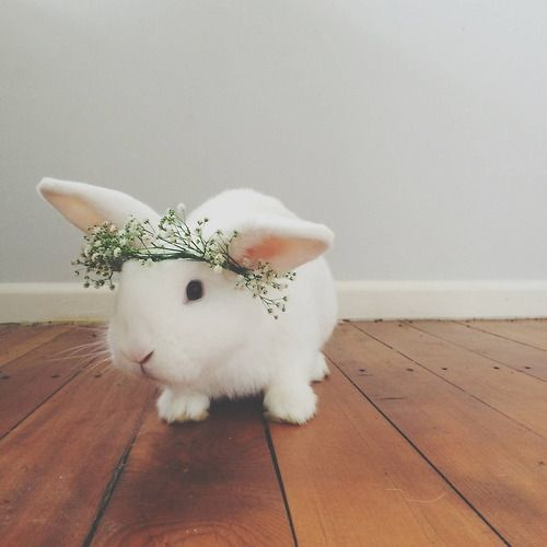 Cuteness overload: bunny with headband