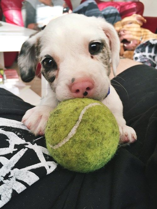 Will you play with me?