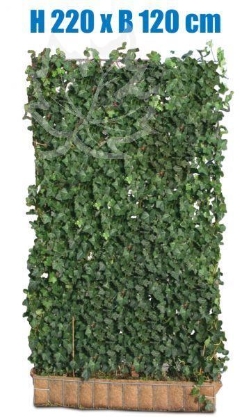 Efeu Hecke| 220 x 120 cm| Sichtschutz | immergrüne Hecke | Fertighecke in Garten & Terrasse, Gartenzäune & Sichtschutzwände, Sicht- & Lärmschutzwände | eBay!