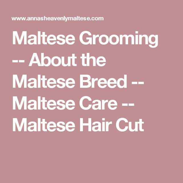 how to cut maltese hair with scissors