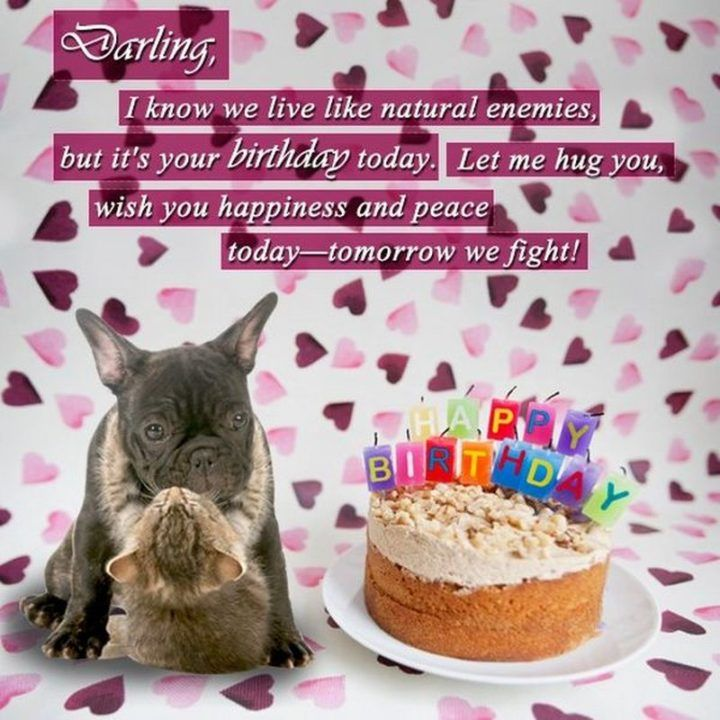 best happy birthday memes to share friends and family in