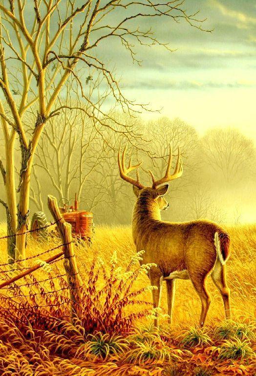 Farmall Tractor Amp A Buck Deer Painting Deer Art