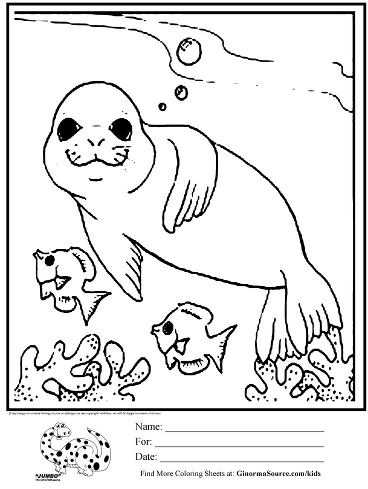 coloring page seal swimming with fish