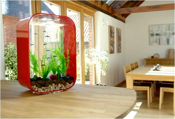 Minimalist fish tank. Cute!