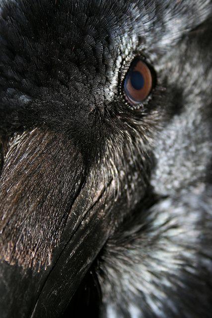 Raven by Helen#White, via Flickr