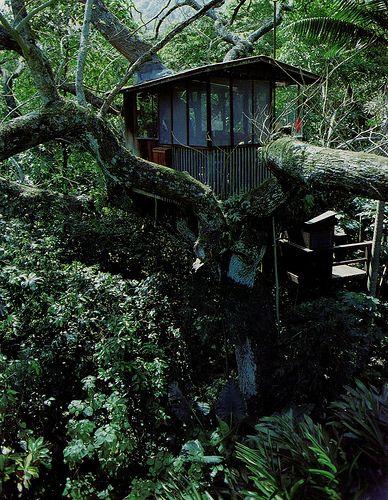 Lush Green Tree House