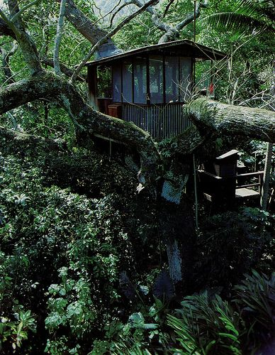 Lush Green Tree House