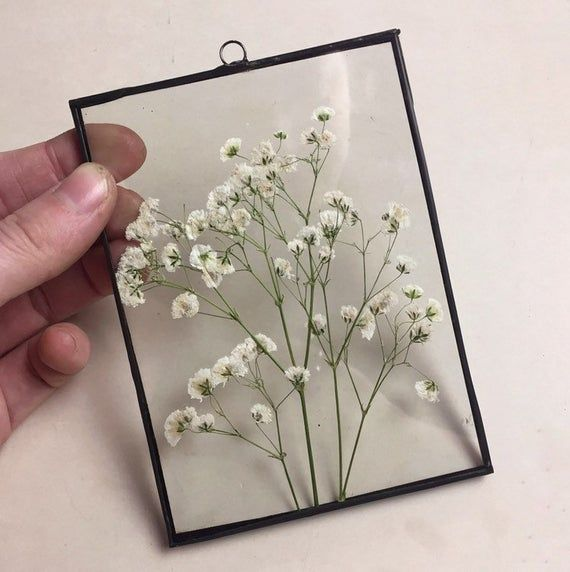 This arrangement with fantastic carefully pressed babys breath flowers will  become a perfect decoration for you…   Pressed flowers, Pressed flower art,  Flower frame