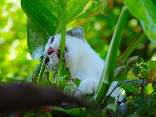 Plantas venenosas para los gatos