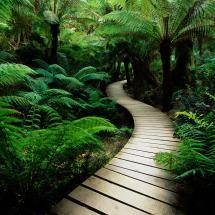 Walkway In The Shady Garden