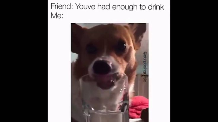 very funny dog with long tongue drinking out of a glass...very funny video