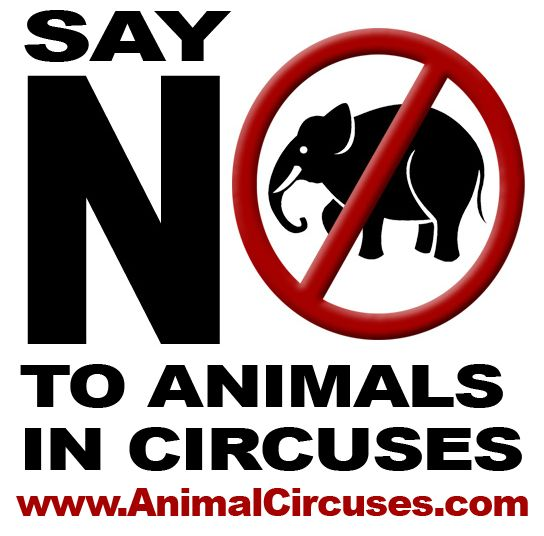 abuse of animals in the circus essay Animal abuse and youth violence: by: jennifer o'connor may, 28, 2011 abstract: although legal definitions of animal abuse vary, it is a crime in every state, and many states have enacted laws establishing certain forms of cruelty to animals as felony offenses.